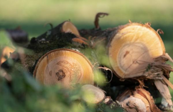 Kaip elgtis įtarus miško vagystę?
