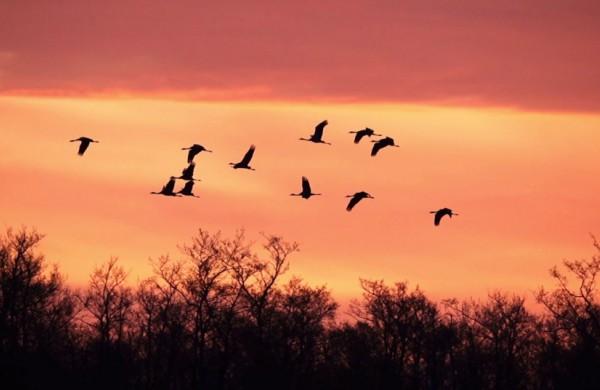 Paukščių palydos Žuvinte – išlydėkime migruojančius sparnuočius
