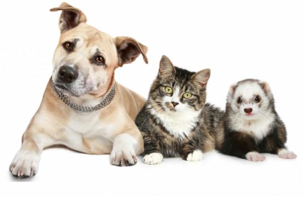 Ženklinti augintinius galės ne tik veterinarijos gydytojai – rengiami specialūs mokymai