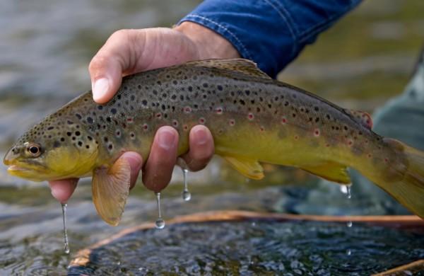 Spalio 1-ąją įsigalioja griežtesni reikalavimai lašišinių žuvų žvejybai