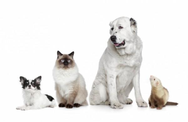 Žinia augintinių šeimininkams – paženklinti gyvūnus būtina, bet paprasta