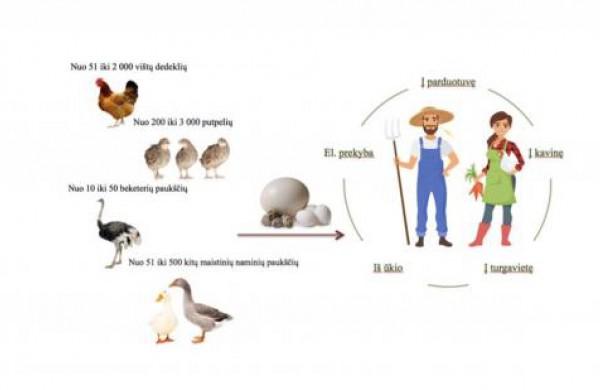 Jau galima mažais kiekiais prekiauti ir kitų naminių paukščių kiaušiniais