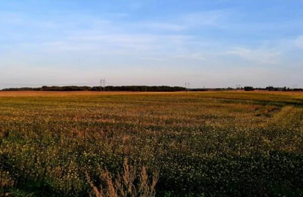 NŽT: užsienio subjektų galimybės įsigyti žemę Lietuvoje