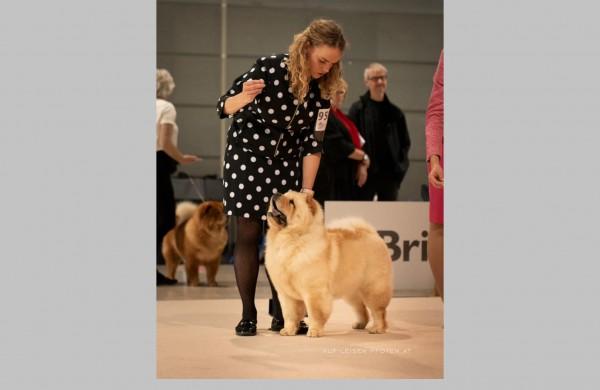 Geriausių pasaulio šunų parodoje - ir Jonavoje įsikūrusio veislyno šuns triumfas