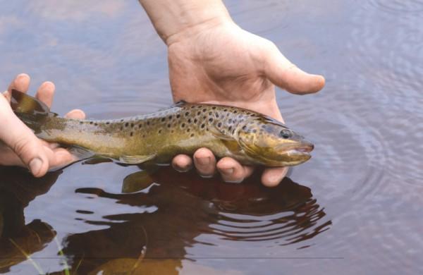 Baigiasi lašišų ir šlakių žvejybos sezonas