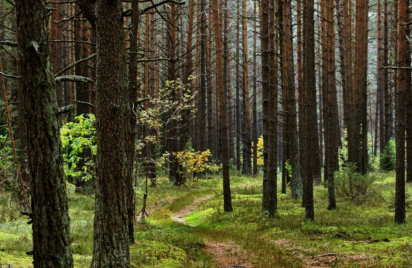 Nekasdienis radinys Ruklos miške: pradėtas tyrimas pagal kelis BK straipsnius