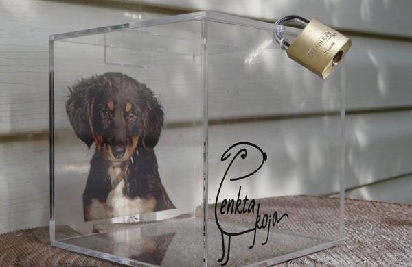 Apvogta Zooprekių parduotuvė - vagišiai išnešė aukų dėžutę, skirtą beglobiams gyvūnams