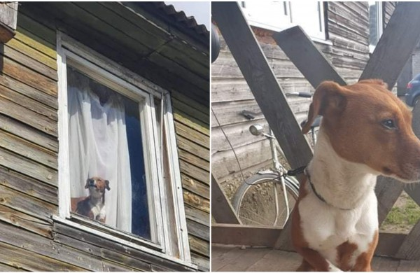 Savanoriai vadavo įkalintą šunį: kaimynai pasakojo, kad keturkojo šeimininkai išsigando viruso