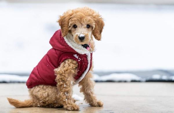 Patarimai, kaip pasirūpinti gyvūnais lauke šalčiausiomis žiemos dienomis