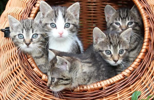 Nuo gegužės privaloma pateikti daugiau informacijos apie parduodamą gyvūną