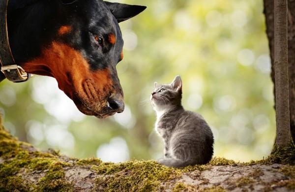 """Privalomasis šunų, kačių ir šeškų ženklinimas – kokios naudos turės eilinis gyvūno savininkas ir kodėl kai kurie """"čipuoja"""" augintinius nieko nelaukdami?"""