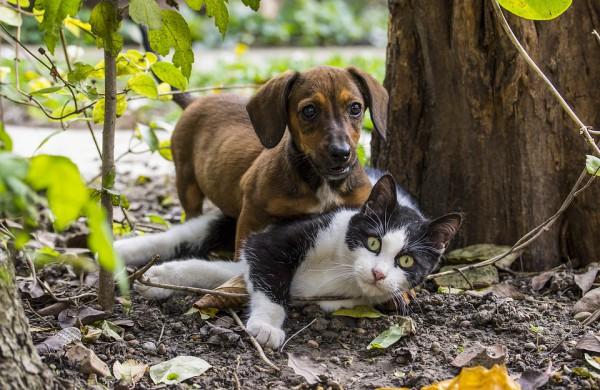 Gyvūnų augintinių veisimas: ką reikėtų žinoti apsisprendusiems to imtis?