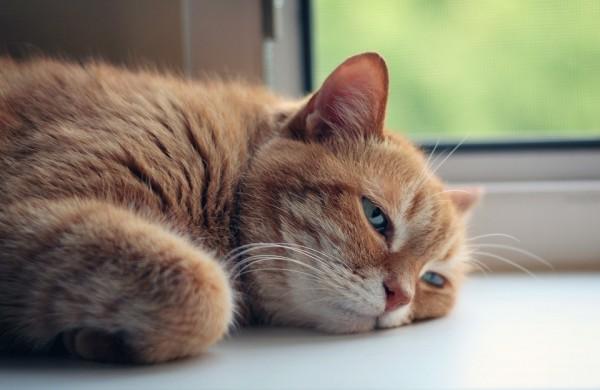 VMVT įspėja – vasaros karščiai gyvūnams gali būti mirtinai pavojingi