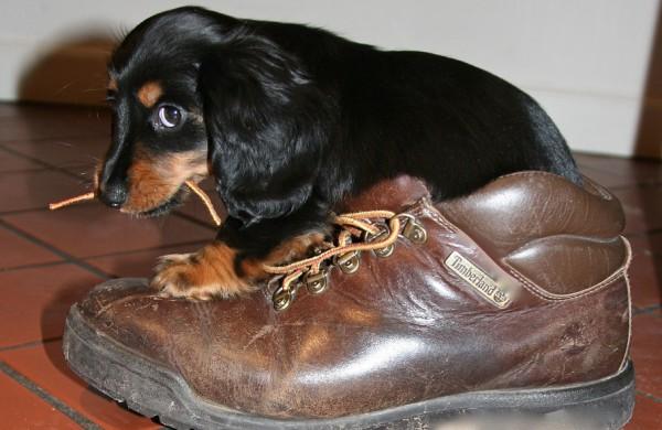 Ką daryti, jei savo šunį negyvai užkapojote mačete? Jau kitą dieną galite įsigyti naują šuniuką!