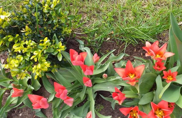 Pavasario žydėjimas