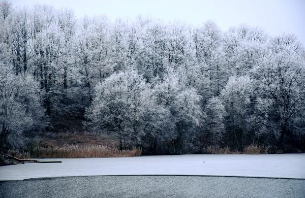 Žiema