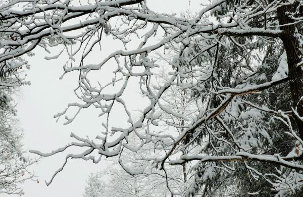 žiemos išdaigos