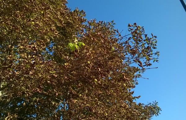 rudens išdaigos