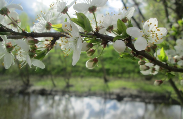 Pavasario žiedų svaiginantis grožis