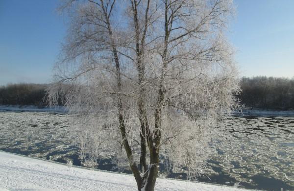 Laukiu tokios žiemos.